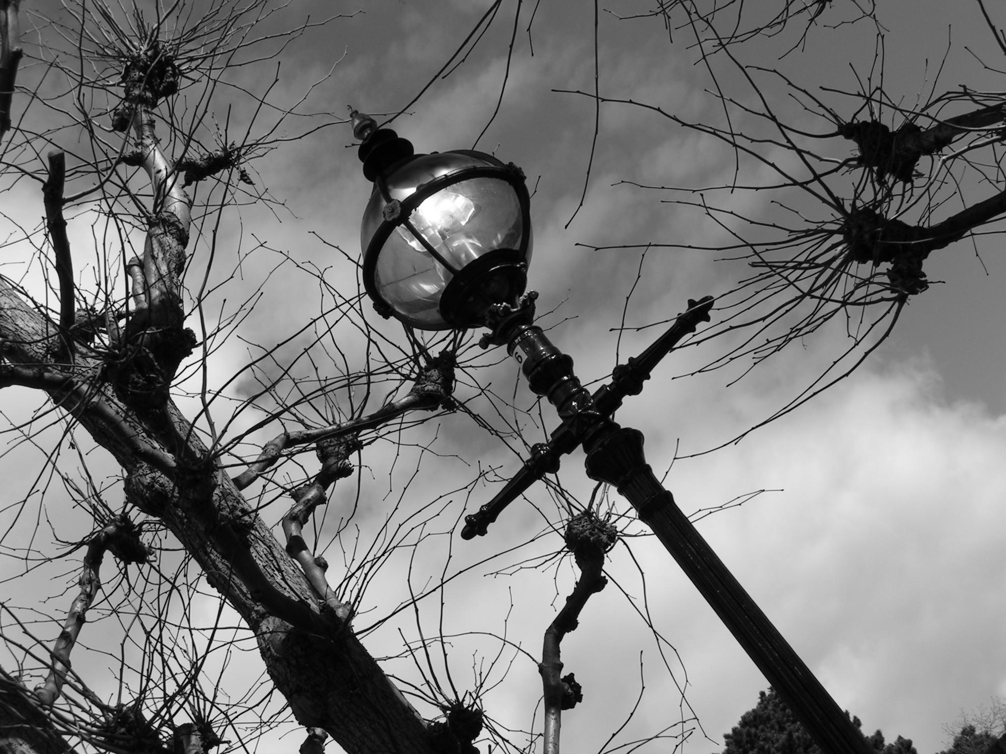 Wx3 Writing Exercise & Inspiration: Lamppost & Branches