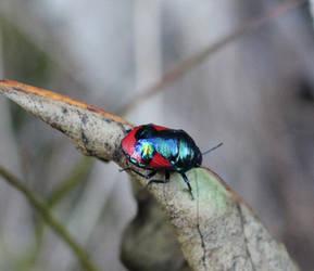 Amazing bug