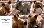 Sabretooth tiger beastie