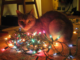 Christmas cat by stridertheporcupine