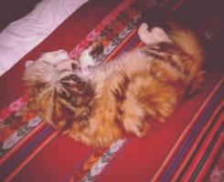 It's a cat life