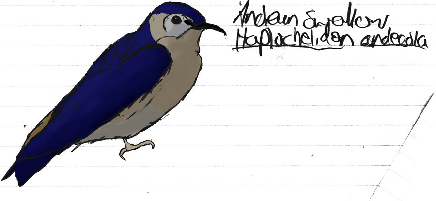 [Image: andean_swallow_by_michelle56-d3comwc.png]