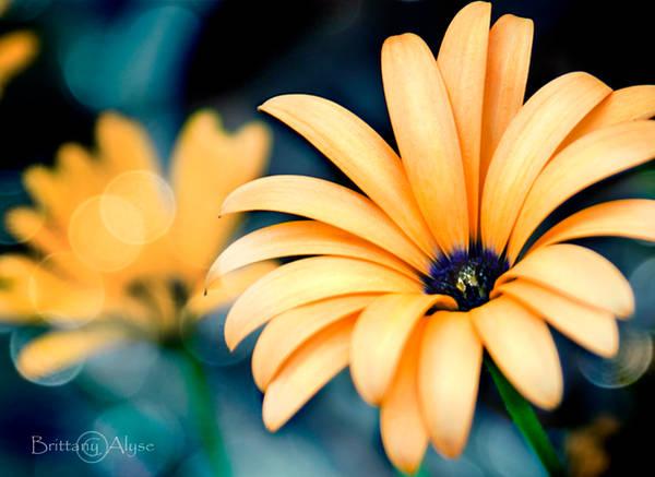 Orange Flower by my-goddess