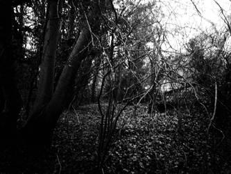 Trees Cast Shadows Too by Aquitius