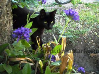 Kitty Photo 1 by SUDDI