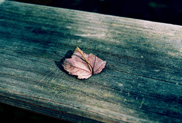 solitary leaf by flightlessbeaker