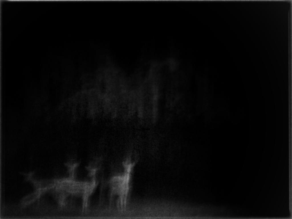 Hinds in the Dark by MaryLugosi
