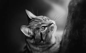 + Tiger Cat + by sven-werren