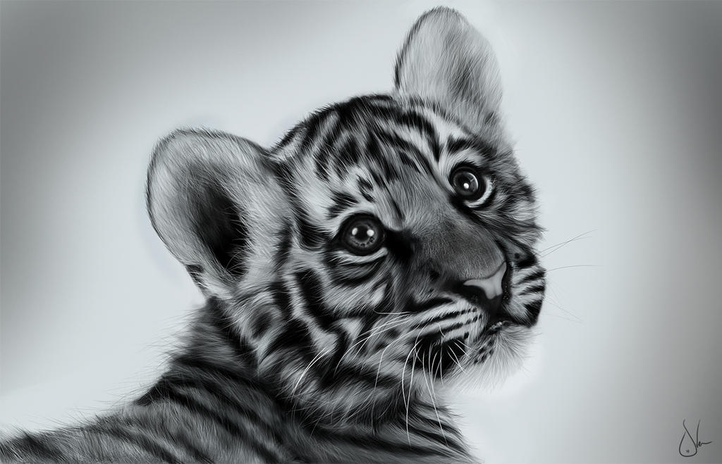 Baby tigers face - photo#25