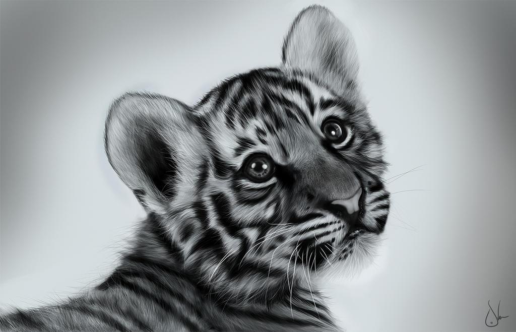 Baby Tiger By Sven Werren On DeviantArt