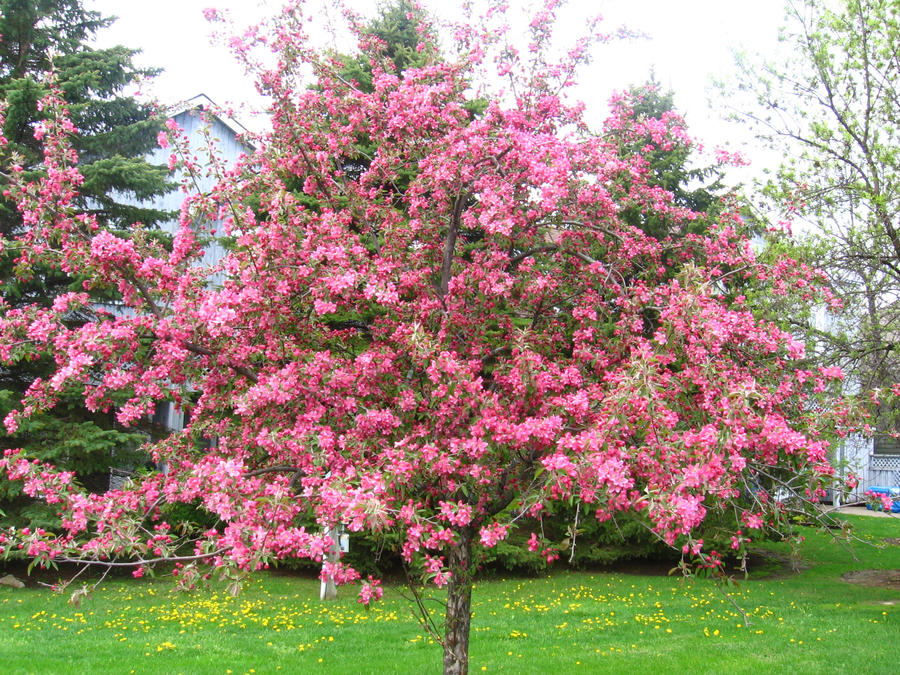 Pink flower tree 2 by halolux on deviantart for Tree with red flowers