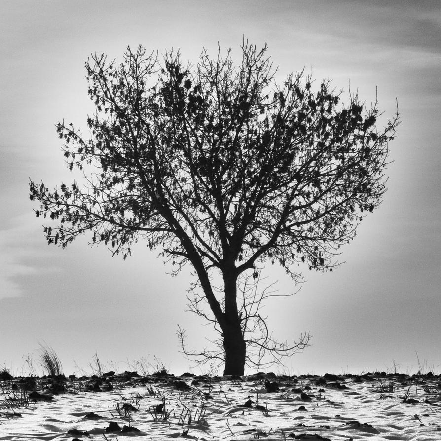 Tree by lord-asriel
