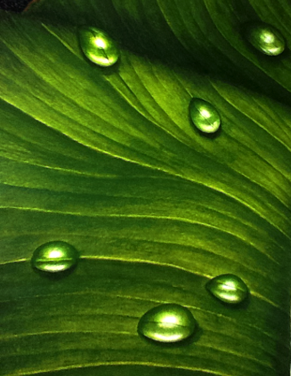 Callalily (close-up I) - Acrylic Paint by joycego
