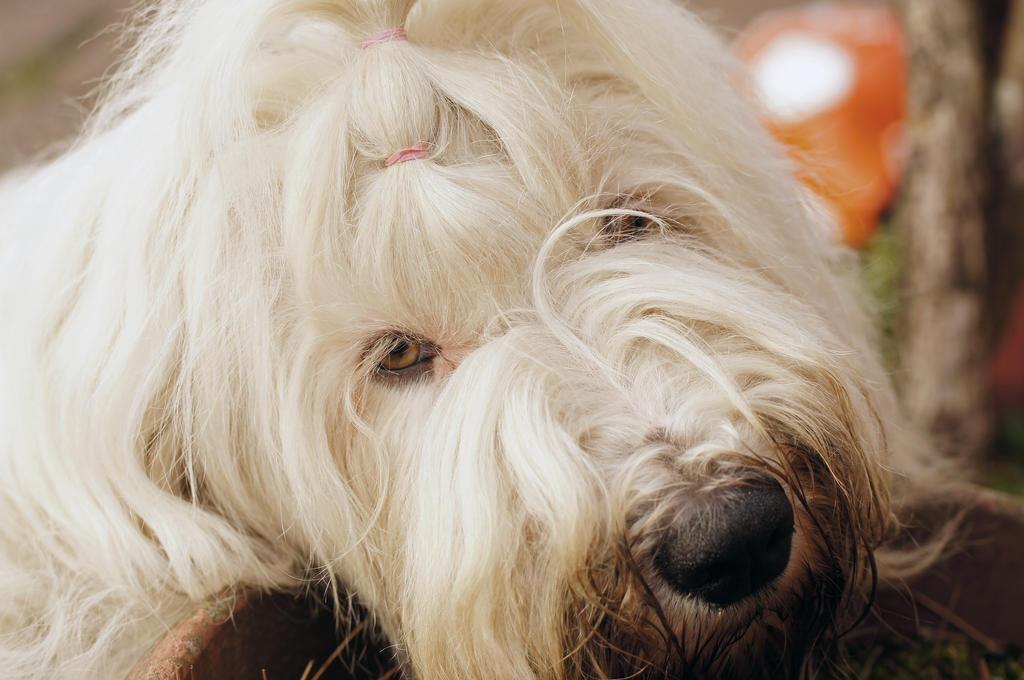 Dalintau's Profile Picture