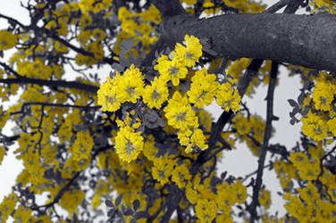 Sky of flowers by Dalintau