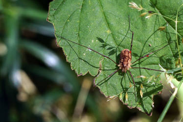 Spider by Dalintau