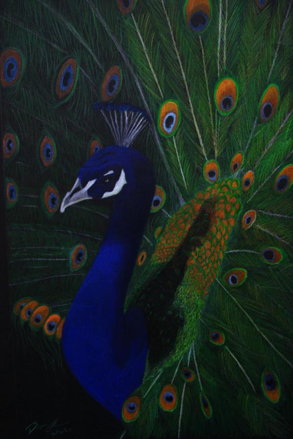 peacock paper