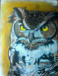 the owl watches