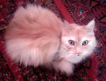 My cute kitty-cat