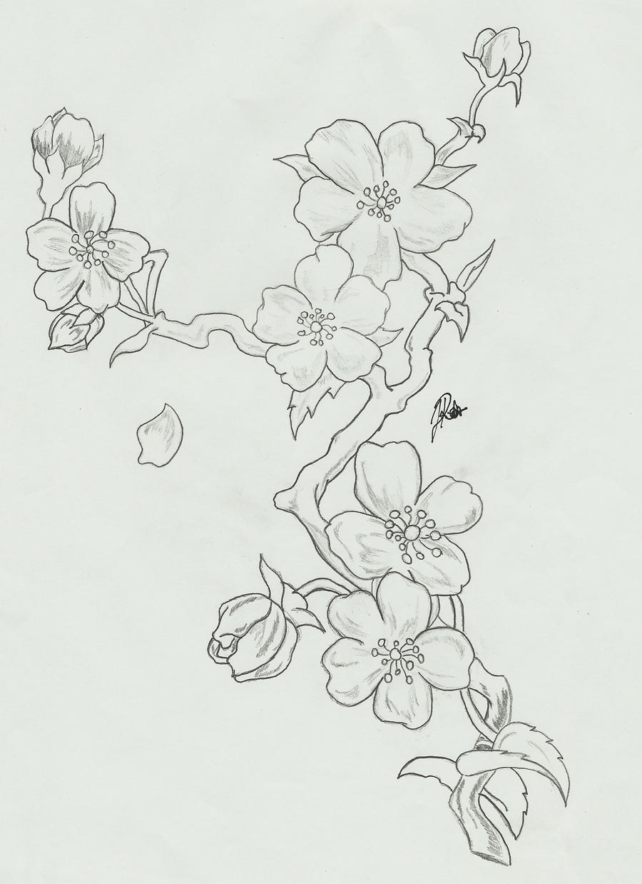 cherry blossom branch coloring pages coloring pages
