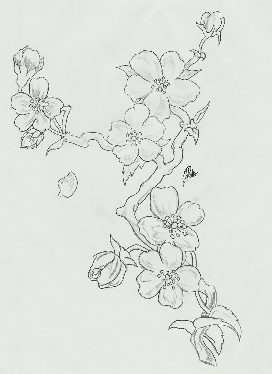 Cherry Blossoms: Branch Sketch by FaytOfAllStars on DeviantArt