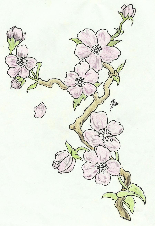 Uncategorized Cherry Blossom Branch Drawing cherry blossoms branch sketch colored by faytofallstars on faytofallstars