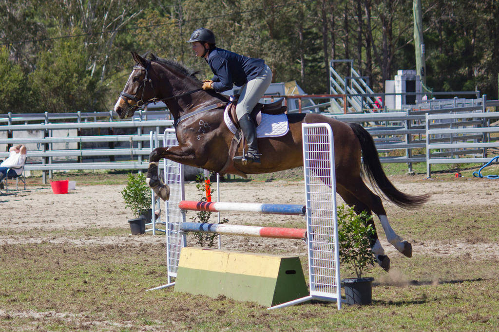 STOCK - Canungra Show 2012 128 by fillyrox