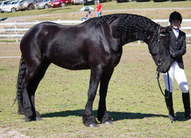STOCK - Canungra Show 2012 174 by fillyrox