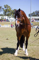 STOCK Gold Coast show 247 by fillyrox