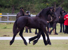 STOCK - Friesian Show 2012-59 by fillyrox