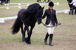 STOCK - Friesian Show 2012-19