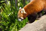 STOCK - Australia Zoo 2013-99