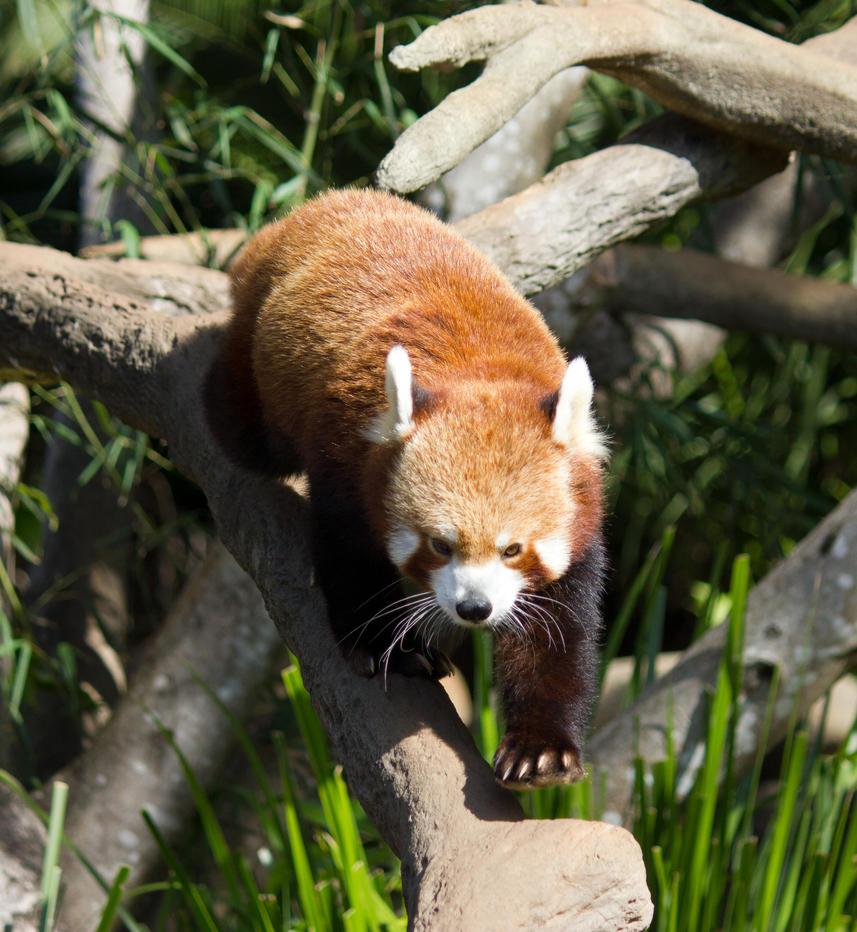 STOCK - Australia Zoo 2013-98 by fillyrox