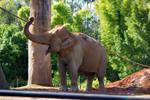 STOCK - Australia Zoo 2013-91