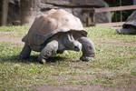 STOCK - Australia Zoo 2013-66