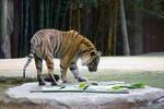 STOCK - Australia Zoo 2013-284
