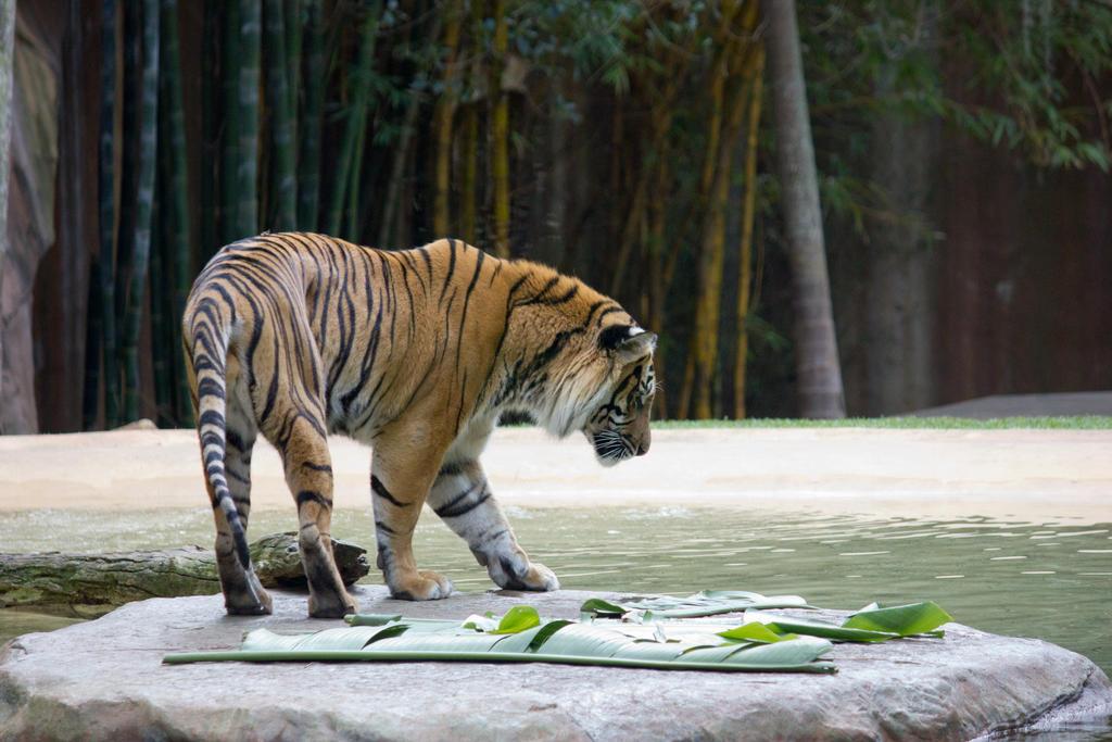 STOCK - Australia Zoo 2013-283 by fillyrox