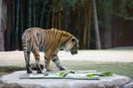 STOCK - Australia Zoo 2013-283