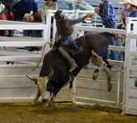 STOCK 2013 Rodeo-235