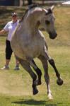 STOCK - TotR Arabians 2013-400