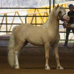 STOCK - 2014 Welsh QLD Show-10