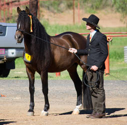 STOCK - 2014 Andalusian Nationals-30 by fillyrox