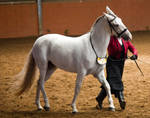 STOCK - 2014 Andalusian Nationals-28