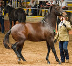 STOCK - 2014 Andalusian Nationals-96