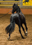 STOCK - 2014 Andalusian Nationals-86