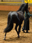 STOCK - 2014 Andalusian Nationals-79