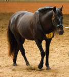 STOCK - 2014 Andalusian Nationals-117