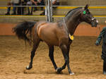 STOCK - 2014 Andalusian Nationals-104