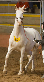 STOCK - 2014 Andalusian Nationals-197