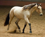 STOCK - 2014 Andalusian Nationals-176